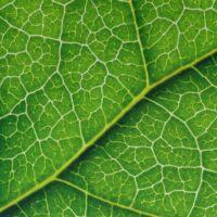 Article banking green bonds series part 4 when green bonds go brown